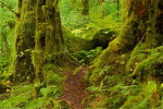 A walk in the Great Bear Rainforest
