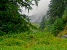 In the heart of the Great Bear Rainforest